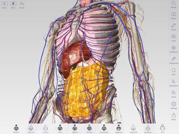 Apple Launches 3d4medical Anatomy App